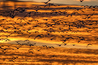 Bosque del Apache National Wildlife Refgue